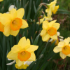 Spring ✔ List