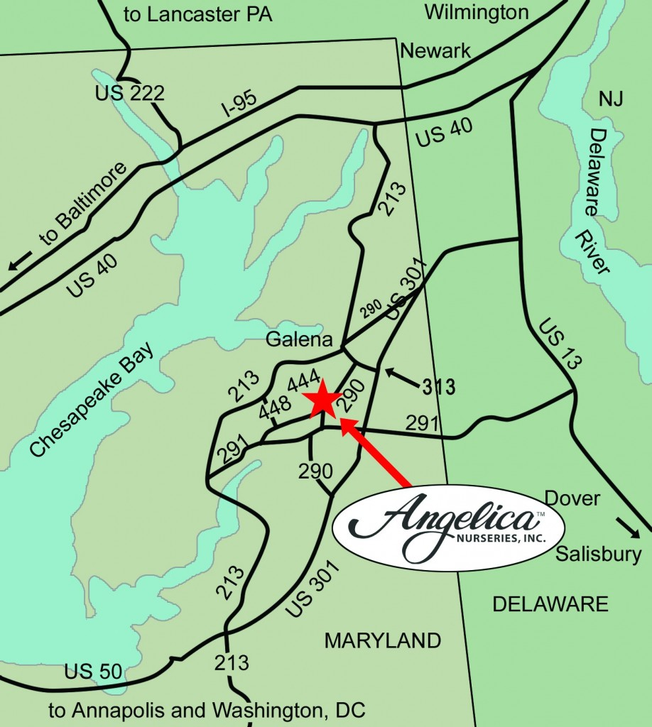 Find Us Angelica Nurseries Inc - Us route 301 map