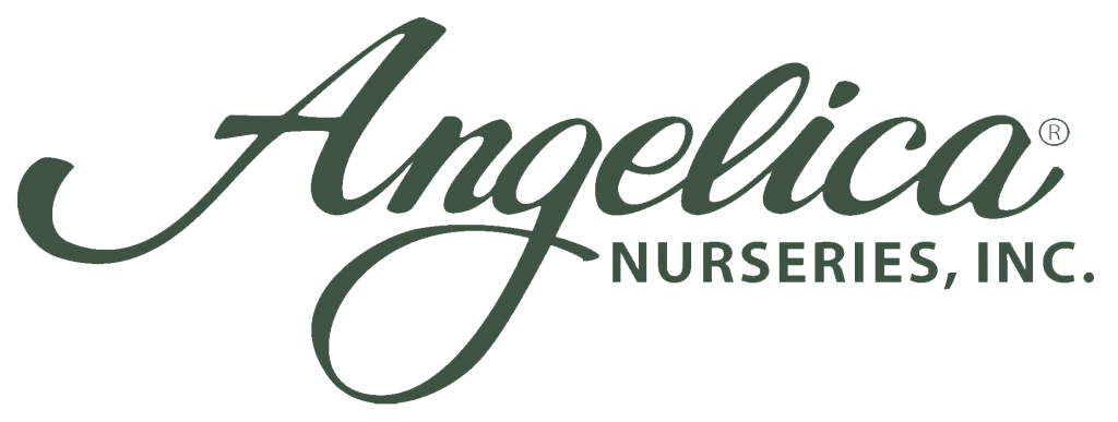 Angelica Nurseries, Inc.